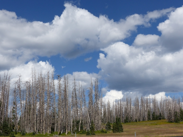 Cedar Breaks_Sky and trees2_1