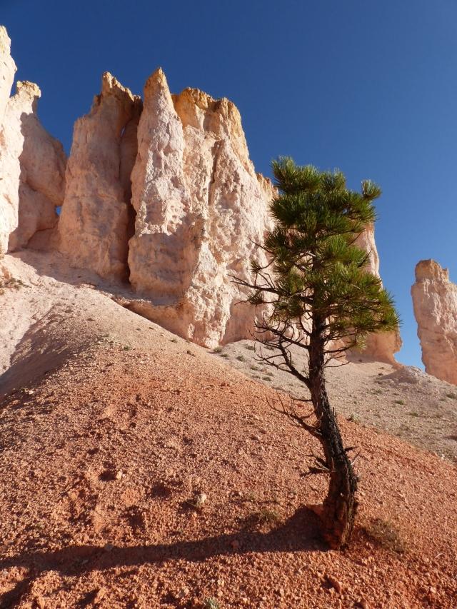 Bryce Canyon_Fairyland Trail2