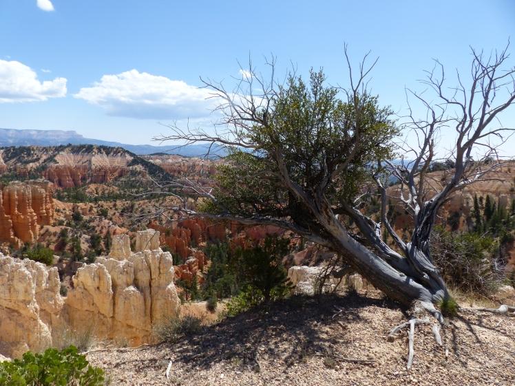 Bryce Canyon_Fairyland Trail21