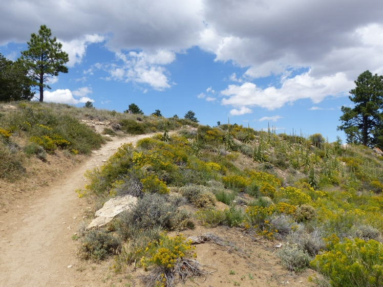 Bryce Canyon_Fairyland Trail28