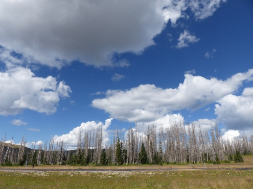 cedar-breaks_sky-and-trees2_3