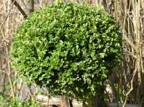 Die unzähligen Buxbäume bringt mein Vater immer schön in Form - auch wenn der rest des Gartens ja eher wild ist.