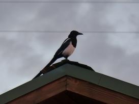 ... Vogel gute Nacht sagen