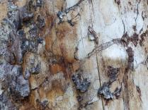 Wald_Struktur+Textur_12