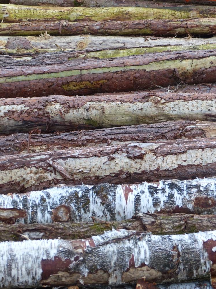 Wald_Struktur+Textur_14