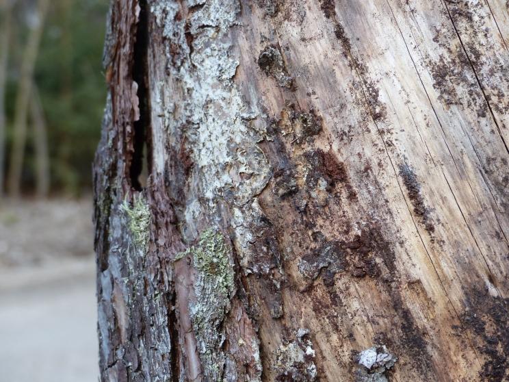 Wald_Struktur+Textur_15