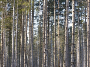 Wald_Struktur+Textur_5