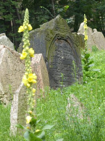 Prag_jüdischer Friedhof_15