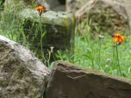 Prag_jüdischer Friedhof_17