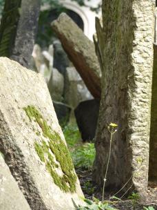 Prag_jüdischer Friedhof_4