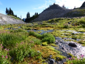 mt-rainier_day1_36