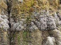 oregon-coast__crescent-beach_33
