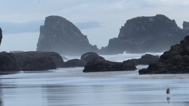 oregon-coast__indian-beach_18