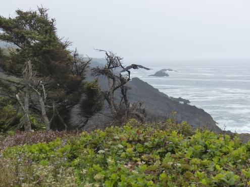 oregon-coast_viewpoints_13