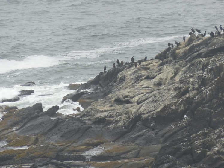 oregon-coast_viewpoints_36