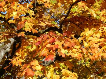 Herbst_Wahltag_23