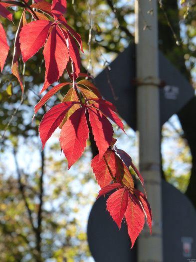 Herbst_Wahltag_26